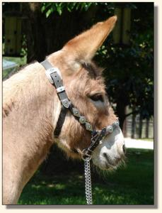 Click image of miniature donkey to enlarge photo