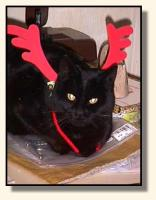 Irma, the Reindeer cat? (6829 bytes)