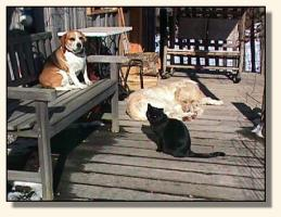 Porch Buddies, Ollie; Rosie, the Beagle; & Irma, the cat (14,302 bytes)